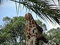 Jacksonville zoological garden, Florida, USA (2202913).jpg