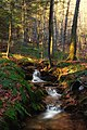 Jacoby Falls Trail (12) (15820974179).jpg