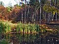 Jazierka v Ťahanovskom lese ^ Lake in the forest Ťahanovce - panoramio.jpg