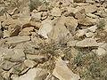 Judean Desert IMG 1842.JPG