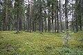 Karhunpesännummi, Liesjärven kansallispuisto, Tammela, 15.11.2014..JPG