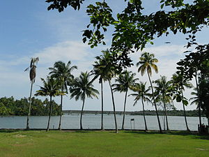 Chavara - Chavara backwaters
