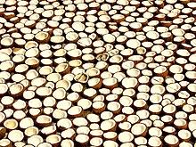 جوزالهند.------- 220px-Kerala_coconut
