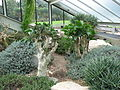 Kew Gardens - London - September 2008 (2955957940).jpg
