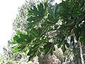 Kibutz Yagur IMG 2883.JPG