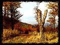 Kilátás a Zengő pihenőtől észak felé - panoramio.jpg