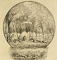 Kinston Swamp.jpg