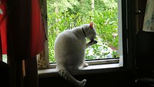 Kitten at the window.jpg