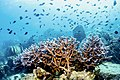 Koh Chang diving 1.jpg