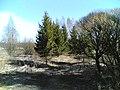 Koivumäenpolku - panoramio (5).jpg