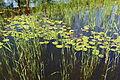 Kopački rit water lilies and reeds.JPG
