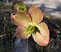 Kranjska Gora - plant2.jpg
