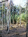 Kunraticky Forest Centr 5, Prague.jpg