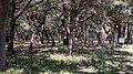 Kyle Family Pioneer Cemetery.jpg