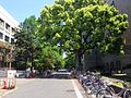 Kyoto University Campus.jpg