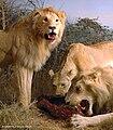 Løvegruppe.jpg