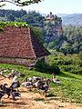 Lacave Chateau de Belcastel et oies.jpg