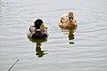 Lake Merced Park - March 2018 (2655).jpg