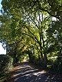 Lane, Shobley - geograph.org.uk - 1543861.jpg