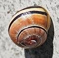 Lanersbach - snail.jpg