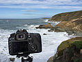 Larus occidentalis in flight (Bodega Head) - making of.jpg