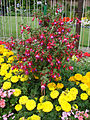 "Le ""Victorian Walled Garden (parc Bellahouston, Glasgow) (3814532844).jpg"