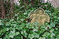 Leaf and stone (16969503362).jpg