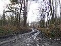 Limekiln Lane, Limekiln Wood - geograph.org.uk - 320178.jpg
