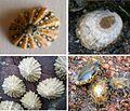Limplets various examples.jpg