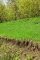Lines - panoramio (1).jpg