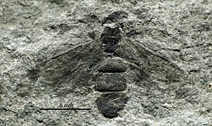 1867 in paleontology - Liometopum imhoffii