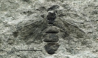 1867 in paleontology - Liometopum imhoffii