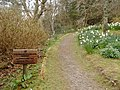 Lochalsh Woodland Garden Path - geograph.org.uk - 393285.jpg