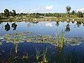Lotus - panoramio (5).jpg