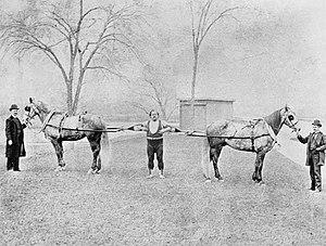 Louis Cyr - Louis Cyr ready to restrain horses, 1891