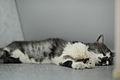 Love to sleep near a bathtub (9754149356).jpg