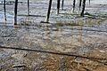 Lower Geyser Basin 01.JPG