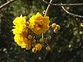 Luang Prabang Botanic Gardens (33412028362).jpg