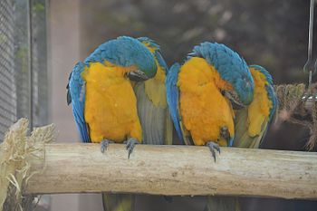 Lucknow Zoo Birds.jpg