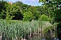 Lutsk Volynska-Volyn botanic garden-near Sapalaivka river-1.jpg