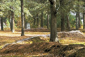 A wooded scene, with tall trees and a leafy carpet.  A mounded earthworks about 2 feet (0.5 m) high snakes through the scene.