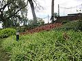 Madeira em Abril de 2011 IMG 1824 (5664256006).jpg