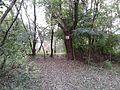 Maly dunaj private property - panoramio.jpg