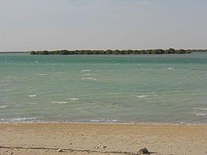 Mangrove island at Dakhira, Qatar