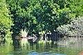 MangrovesVentanilla2.JPG
