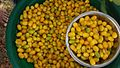 Manilkara hexandra (palu පලු) fruits 1.jpg