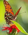 Mariposa sobre flor.jpg