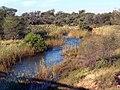 Matlaba river - panoramio.jpg