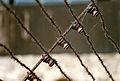 Mauthausen Concentratiekamp Prikkeldraad.jpg