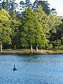 McLaren Lake.jpg